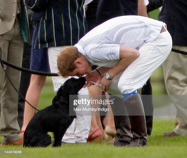 <a gi-track='captionPersonalityLinkClicked' href=/galleries/search?phrase=Prince+Harry&family=editorial&specificpeople=178173 ng-click='$event.stopPropagation()'>Prince Harry</a> plays with Prince William's and Catherine, Duchess of Cambridge's dog 'Lupo' after playing in the Audi Polo Challenge charity polo match, at Coworth Park Polo Club on May 13, 2012 in Ascot, England.