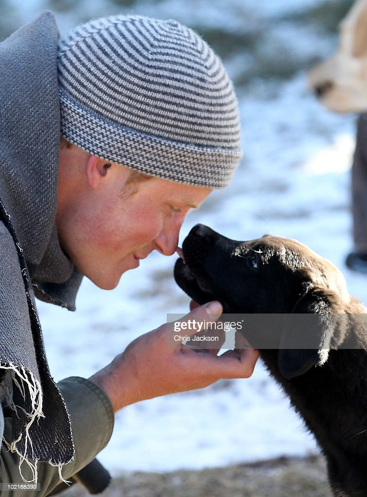 Prince Harry touches a dog during a visit to a child education centre on June 17, 2010 in Semonkong, Lesotho. The two Princes are on a joint trip to Africa which takes in Botswana, Lesotho and finally South Africa. During that time they will visit a number of projects supported by their respective charities Sentebale (Prince Harry) and Tusk Trust (Prince William). The trip will culminate with the brothers watching the England vs Algeria World Cup match in Cape Town.