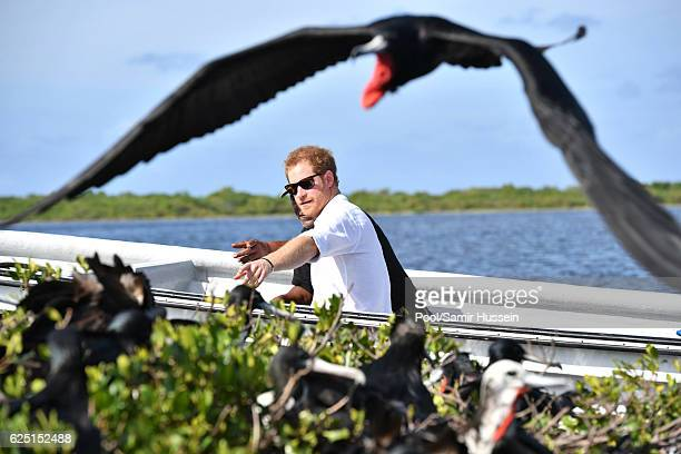 Prince Harry views a Frigate bird during a boat trip to a lagoon on the third day of an official visit on November 22 2016 in Barbuda Antigua and...