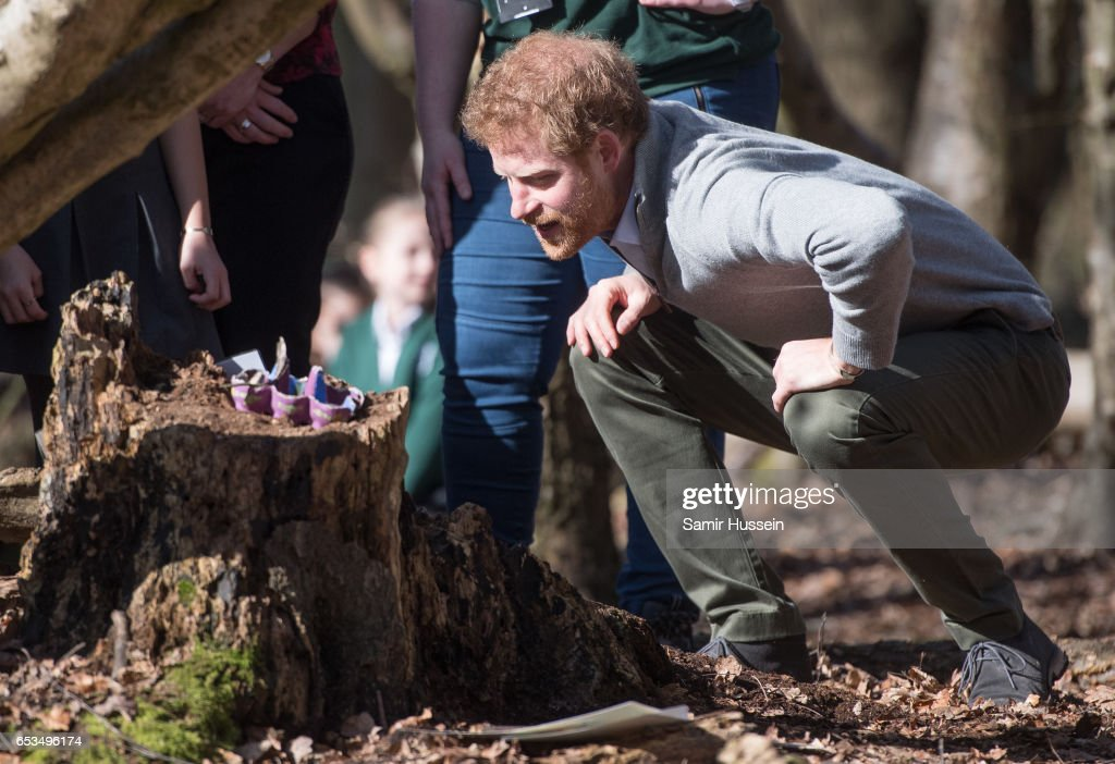 prince-harry-visits-epping-forest-to-view-the-wood-pasture-project-picture-id653496174
