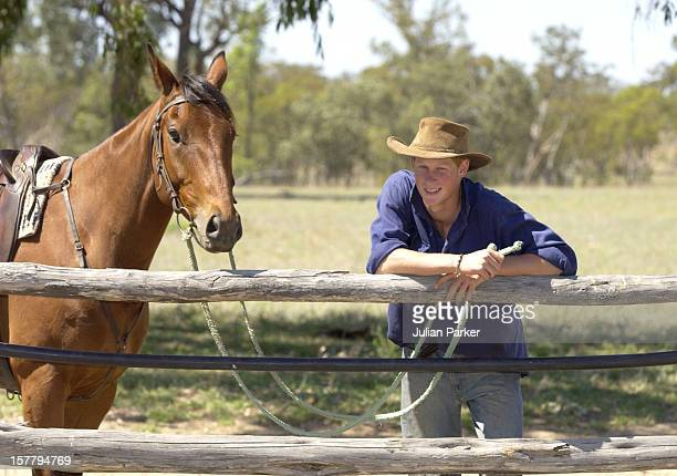 Prince Harry Working As A Jackaroo At Tooloombilla Queensland Where He Rode With A Team Mustering Herd Bulls