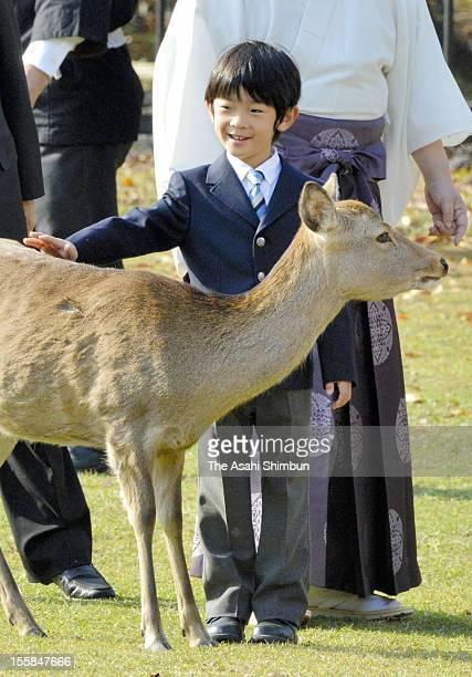 Prince Hisahito pats a deer during the Shikayose heading deers by blowing horn at Tobihino Field of Kasuga Taisha Shrine on November 8 2012 in Nara...