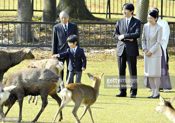 Prince Hisahito pats a deer while Prince Akishino and Princess Kiko watch during the Shikayose heading deers by blowing horn at Tobihino Field of...