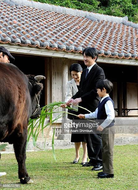 Prince Hisahito plays with a Yonaguni horse while Prince Akishino and Princess Kiko of Akishino watch at the Okinawa KodomonoKuni on December 11 2013...