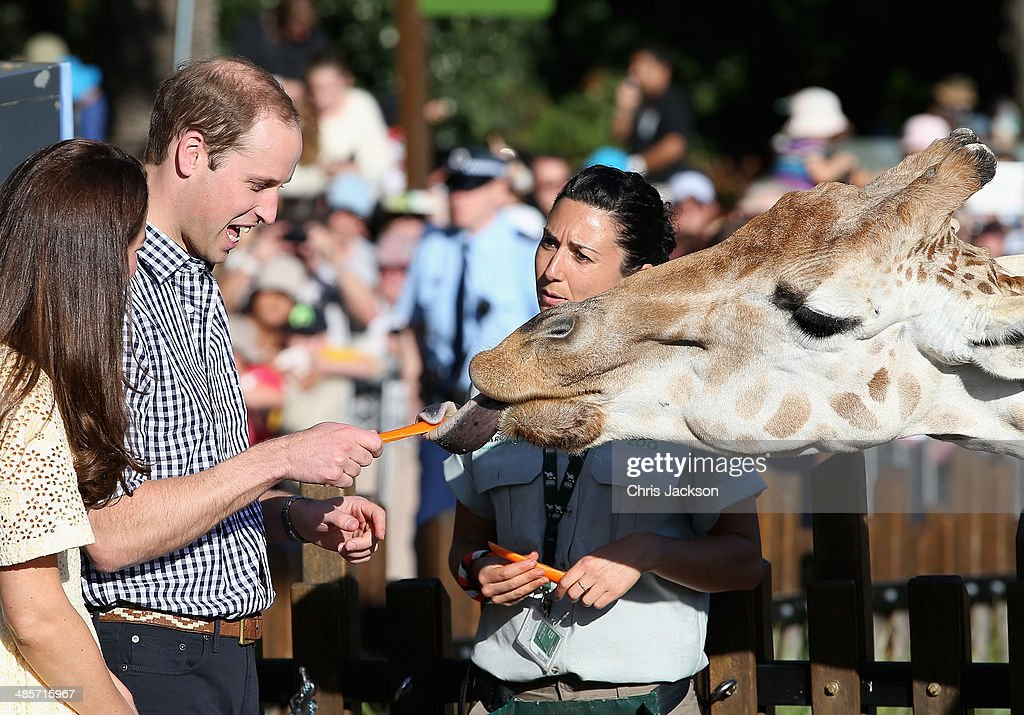 Prince William, Duke of Cambridge and Catherine, Duchess of Cambridge feed giraffes at Taronga Zoo on April 20, 2014 in Sydney, Australia. The Duke and Duchess of Cambridge are on a three-week tour of Australia and New Zealand, the first official trip overseas with their son, Prince George of Cambridge.