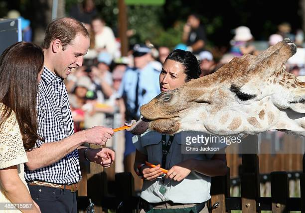 Prince William Duke of Cambridge and Catherine Duchess of Cambridge feed giraffes at Taronga Zoo on April 20 2014 in Sydney Australia The Duke and...