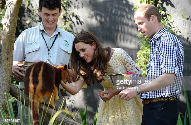 Prince William Duke of Cambridge and Catherine Duchess of Cambridge feed a a tree kangaroo as they isit the Bilby Enclosure at Taronga Zoo on April...