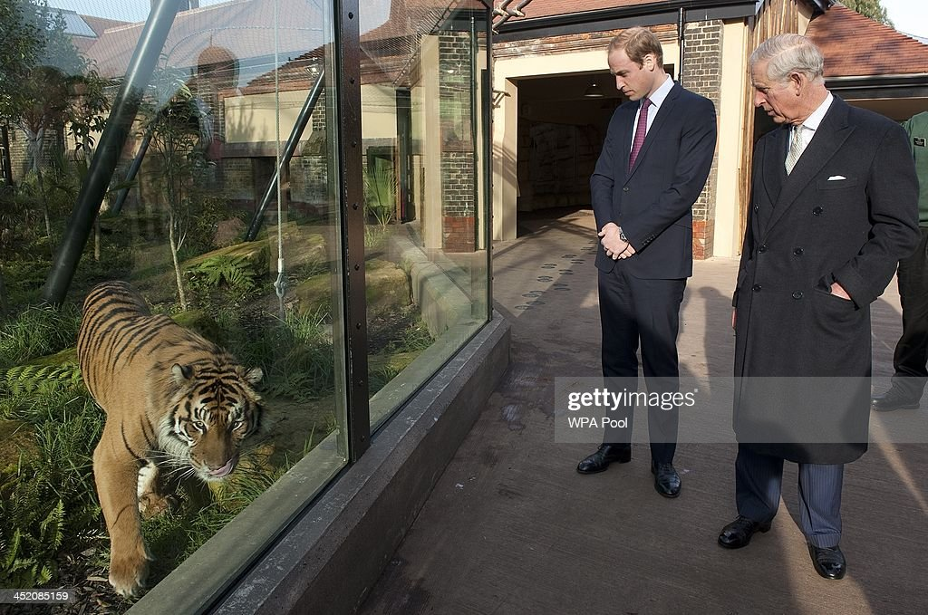 Prince William, Duke of Cambridge and Prince Charles, Prince of Wales meet 'Jae Jae' a Summatran Tiger, as they attend a meeting of 'United for Wildlife' at the Zoological Society of London on November 26, 2013 in London, England. The Duke of Cambridge is President of United for Wildlife, a collaboration of seven of the largest global Conservation organisations.