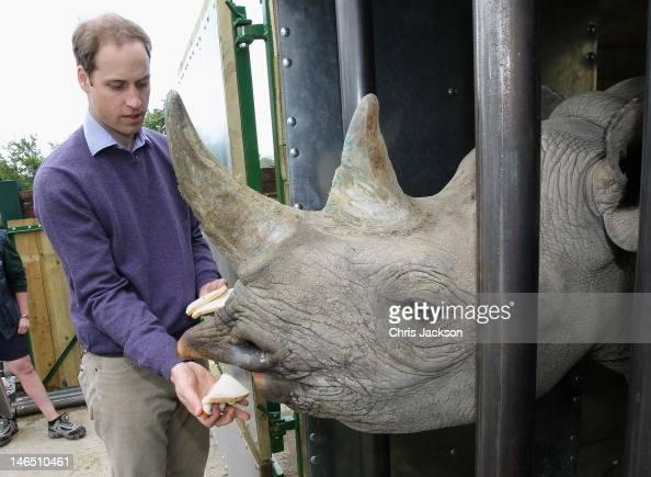Prince William Duke of Cambridge feeds a 5 year old black rhino called Zawadi as he visits Port Lympne Wild Animal Park on June 6 2012 in Port Lympne...