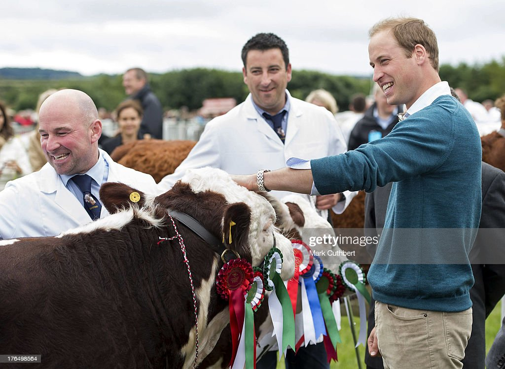 <a gi-track='captionPersonalityLinkClicked' href=/galleries/search?phrase=Prince+William&family=editorial&specificpeople=178205 ng-click='$event.stopPropagation()'>Prince William</a>, Duke of Cambridge looks at some prize bullocks during his visit to the Anglesey agricultural show on his first official engagement since the birth of his son Prince George of Cambridge last month at Anglesey Showground on August 14, 2013 in Bangor, Wales. <a gi-track='captionPersonalityLinkClicked' href=/galleries/search?phrase=Prince+William&family=editorial&specificpeople=178205 ng-click='$event.stopPropagation()'>Prince William</a> had two weeks parental leave from work as a RAF rescue helicopter pilot in Anglesey.