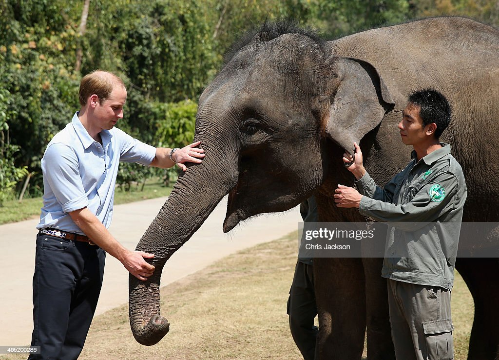 <a gi-track='captionPersonalityLinkClicked' href=/galleries/search?phrase=Prince+William&family=editorial&specificpeople=178205 ng-click='$event.stopPropagation()'>Prince William</a>, Duke of Cambridge meets a rescued elephant called 'Ran Ran' at the Xishuangbanna Elephant Sanctuary on March 4, 2015 in Xishuangbanna, China. <a gi-track='captionPersonalityLinkClicked' href=/galleries/search?phrase=Prince+William&family=editorial&specificpeople=178205 ng-click='$event.stopPropagation()'>Prince William</a>, Duke of Cambridge is on a four day visit to China. He is the most senior royal to visit China since the Queen and Duke of Edinburgh in 1986. His visit follows on from a successful four day visit to Japan