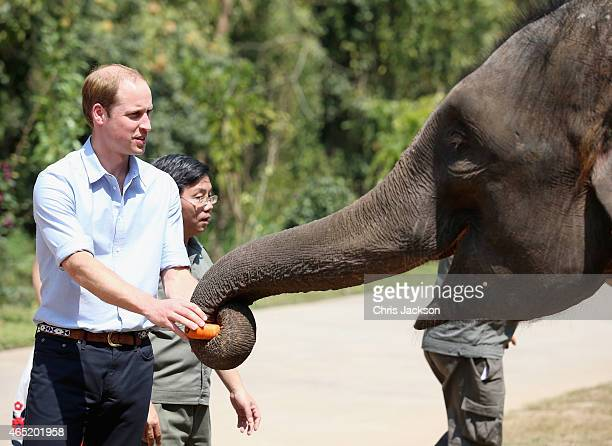 Prince William Duke of Cambridge meets a rescued elephant called 'Ran Ran' at the Xishuangbanna Elephant Sanctuary on March 4 2015 in Xishuangbanna...