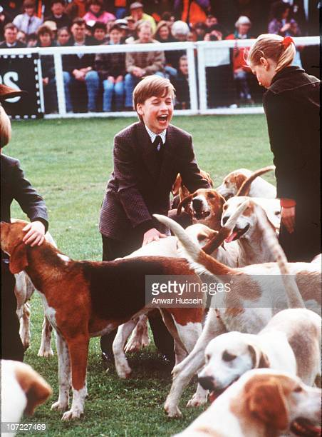 Prince William enjoys playing with the hound dogs at Badminton Horse Trials on May 1 1991 in Badminton England