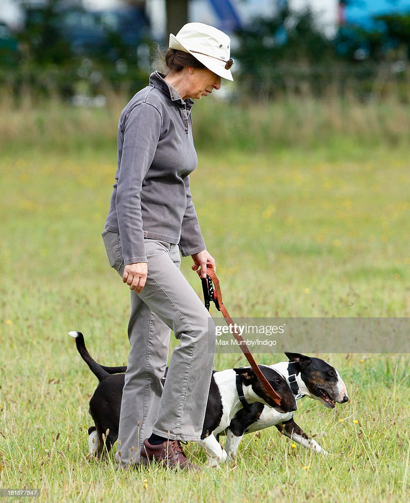 Princess Anne, The Princess Royal walks her Bull Terrier dogs as she attends the Gatcombe Horse Trials at Gatcombe Park, Minchinhampton on September 22, 2013 in Stroud, England.