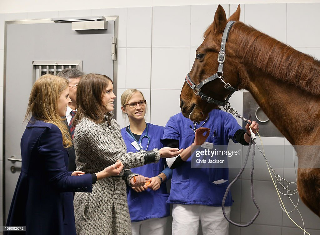 Princess Beatrice and Princess Eugenie feed a horse with a heart condition called Ben as they visit the Equine Clinic at the University of Veterinary Medicine Hanover on January 18, 2013 in Hanover, Germany. The royal sisters are in Hanover on the second day of a two day visit to Germany. Yesterday the royals were in Berlin helping support GREAT, the British Government's initiative promoting the UK abroad.
