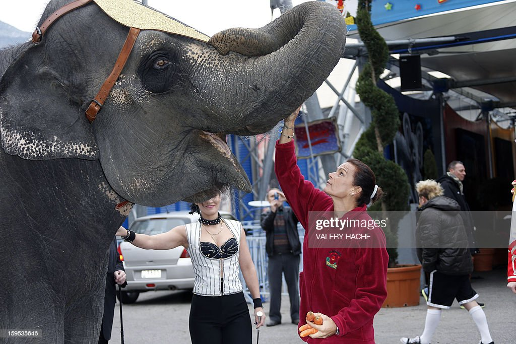 Princess Stephanie of Monaco (C) feeds an elephant with carrots, on January 15, 2013 in Monaco, ahead of the 37th edition of the Monte-Carlo International Circus Festival, in Monaco. The International Circus Festival will run from January 17 to January 27, 2013.