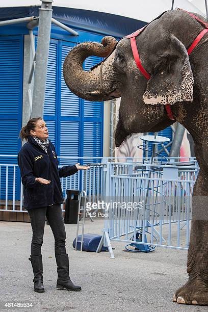 Princess Stephanie of Monaco poses with an elephant during a Press conference to launch the 39th International Circus Festival on January 13 2015 in...