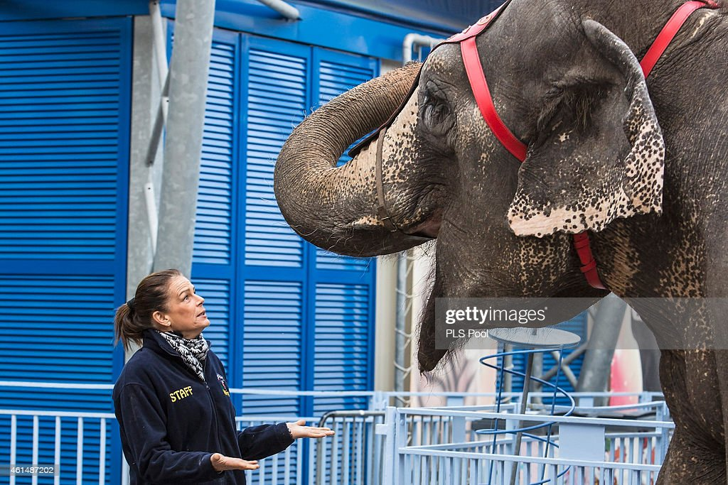 Princess Stephanie of Monaco poses with the elephant 'Babe' during a Press conference to launch the 39th International Circus Festival on January 13...