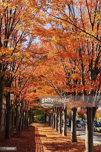 Princeton in Fall