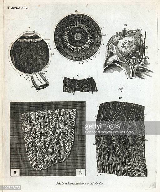 Print showing the internal structure of the human eye Europe 18511860 Print on paper Tabula XLV from the anatomical treatise 'Schola et Historia...