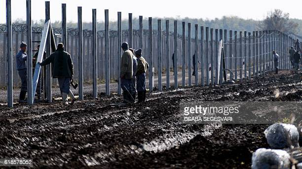 Prisoners build a new second fence at the HungarianSerbian border near Gara village on October 27 2016 as part of its efforts to keep migrants and...
