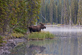 """""""A bull moose is reflected in wilderness waters.For more natural wonders, click the Lightbox links below:"""""""