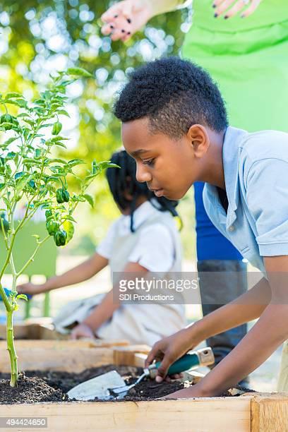 Private studenti di scuola elementare in classe di scienze giardinaggio
