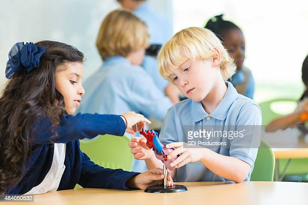 Private elementary school students studying human heart during science class