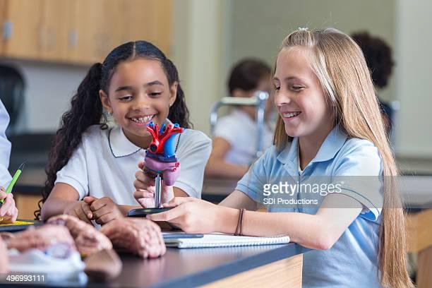 専用の学校の学生をモデルに科学中心クラス