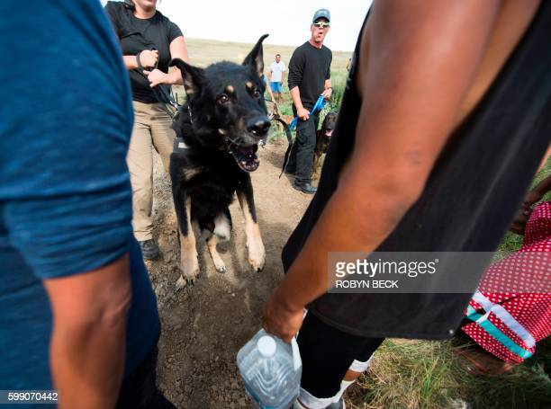 Private security guards allow attack dogs to lung at a protestors after protestors arrived to stop bulldozing of land for the Dakota Access Pipeline...