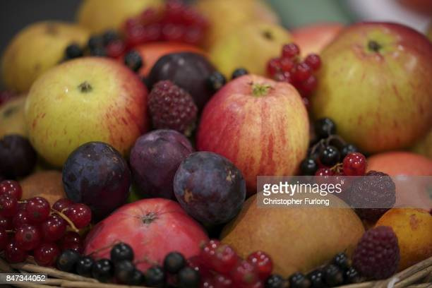 Prize winning fruit is displayed at the Harrogate Autumn Flower Show on September 15 2017 in Harrogate England Gardeners and horticulturalists from...