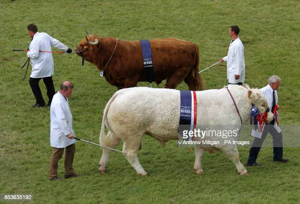 Prizewinning cattle including Ruaridh of Ubhaidh the Highlander owned by HM The Queen Balmoral Estate are paraded through the main ring at the Royal...