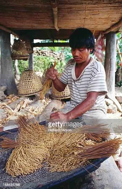 Processing rice.