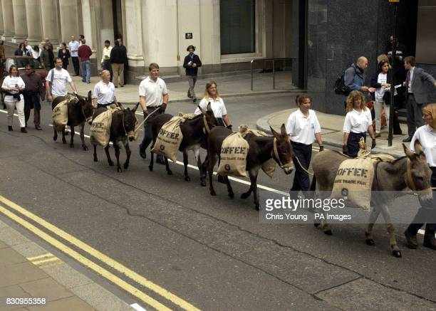 A procession of donkeys laden with sacks of coffee beans are paraded past the Stock Exchange in London as part of a protest by Oxfam to highlight the...
