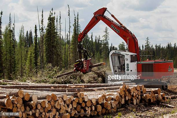 A processor removes limbs from recently harvested pine trees in a forest near Whitecourt Alberta Canada on Thursday June 4 2015 Since the late 1990s...