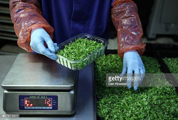 Produce is weighed and prepared to be packed ready for sale in one of the Underground tunnels at 'Growing Underground' in Clapham on October 24 2016...