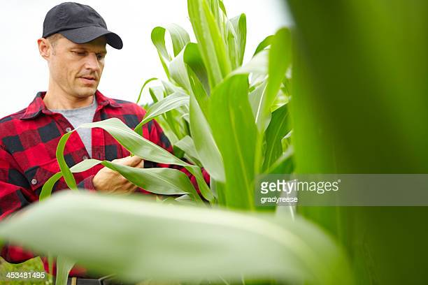 Producing excellent crops with his expertise