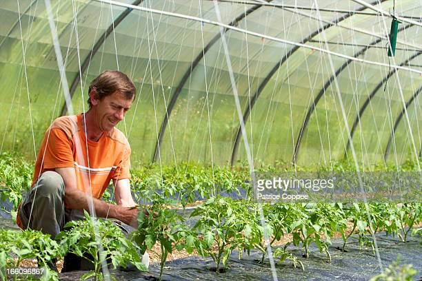 Producteur légumes bio