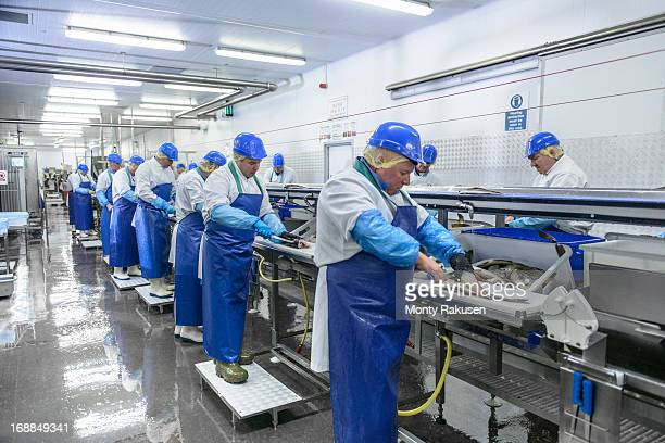 Production line of workers filleting fish in factory