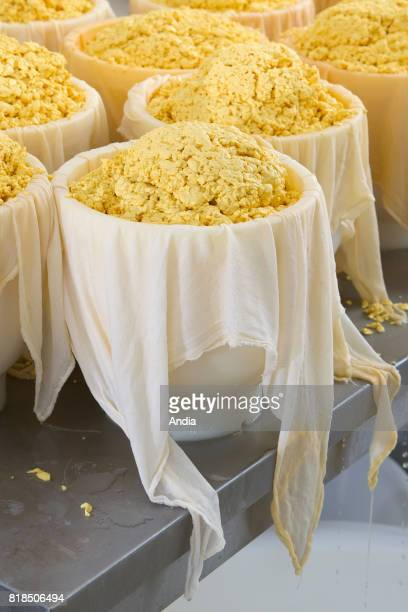 Production of mimolette du Wint cheese also known as the 'vieux Hollande' or 'boule de Lille' cheese a hard cow's milk cheese