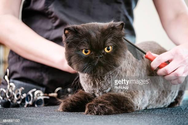 Niveladora de gatos profissionais em um Salão de Beleza para Animais de Estimação