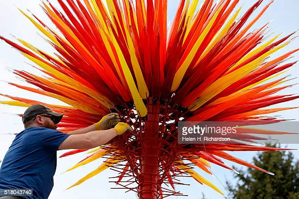 Professional glass installer Rick Holland carefully places glass into the Chihuly glass sculpture entitled Colorado in the Ellipse Garden at the...