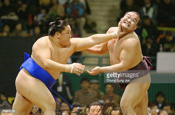That interestingly arm championship midget pro sumo wrestling share