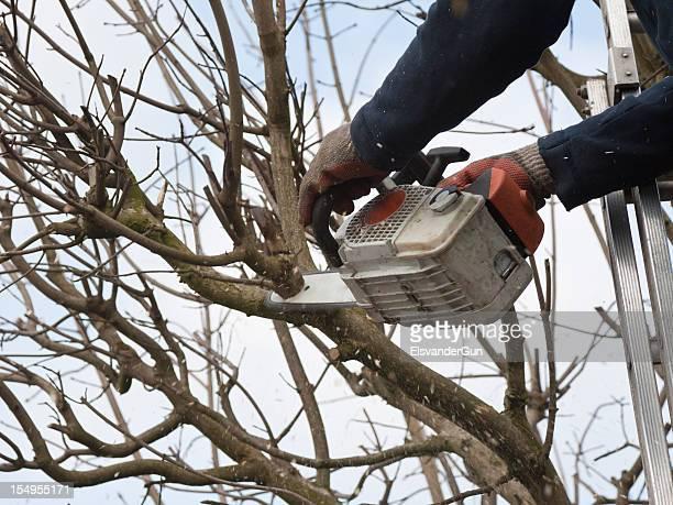 Professionelle Stutzen einem Baum