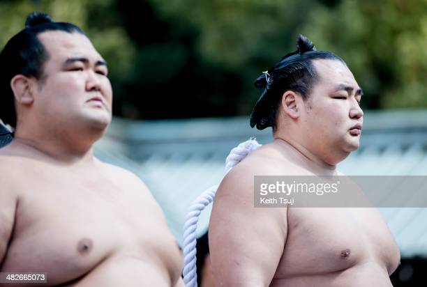 Professional Sumo wrestler Kotoshogiku Kazuhiro and Kakuryu Rikisaburo and are seen during the Ceremonial Sumo Tournament or Honozumo at the Yasukuni...