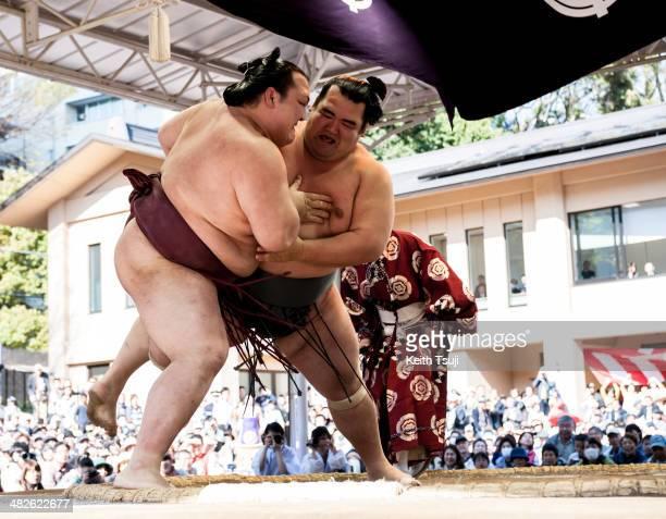 Professional sumo wrestler Kotoshogiku Kazuhiro pushes his opponent Kisenosato Yutaka during the Ceremonial Sumo Tournament or Honozumo at the...