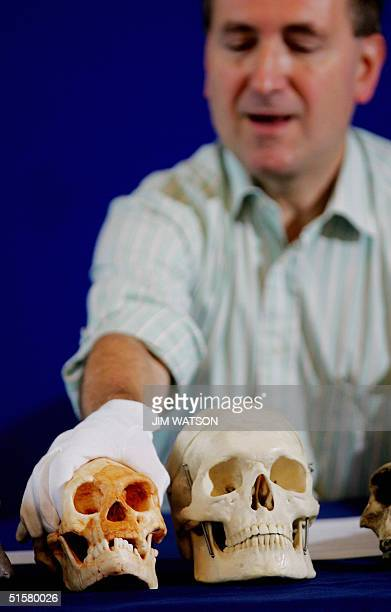Professor Chris Stringer of the Natural History Museum holds his hand over a skull that was found at a cave site called Liang Bua that belonged to an...