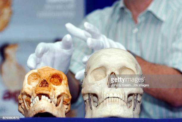 Professor Chris Stringer talks to the media about the discovery of a new species of human living on the Indonesian island of Flores as recently as...