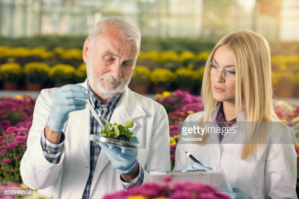 Professor of agriculture showing young blonde student girl how to use pipette