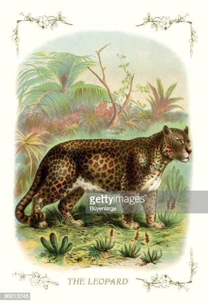 Profile of a leopard in the jungle